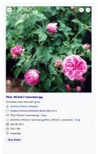 Screen Shot 2021-01-13 at 4.58.11 PM.png (1×699 px, 834 KB)
