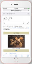 ja-iPhone6sPlus-9.png (1×808 px, 609 KB)