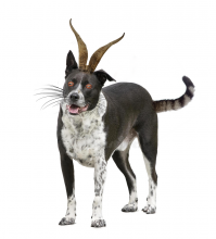 weird-animal.png (1×1 px, 489 KB)