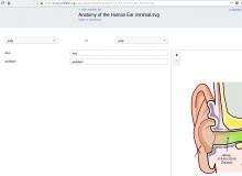 anatomy_ear_tamil.png (916×1 px, 81 KB)